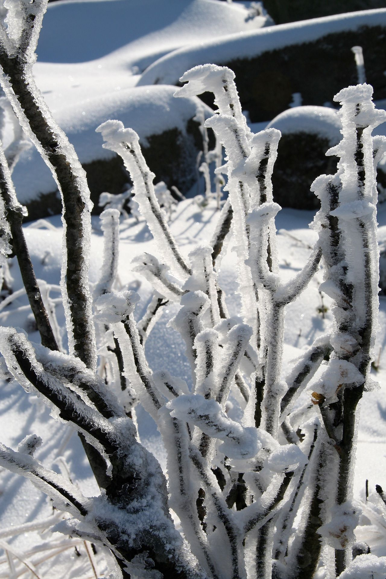 Frosted Frosted Nature Frosted Trees Frosted Bough Shrub Winter Wintertime