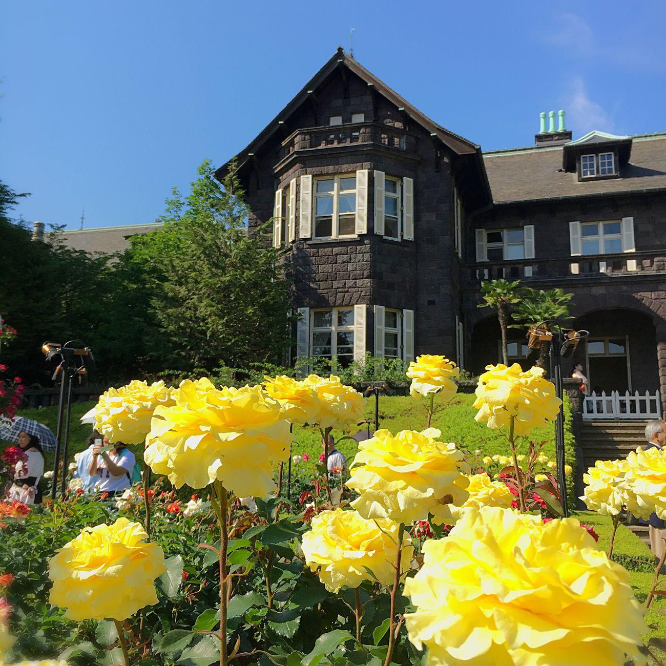Rose Garden Tokyo Japan Iphone6s