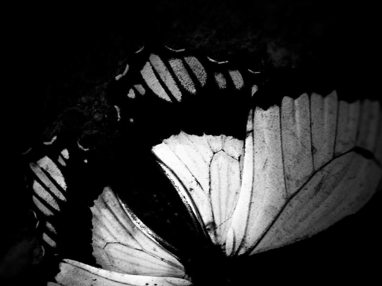Day butterfly on night Light And Shadow Dark Black And White Nature Butterfly