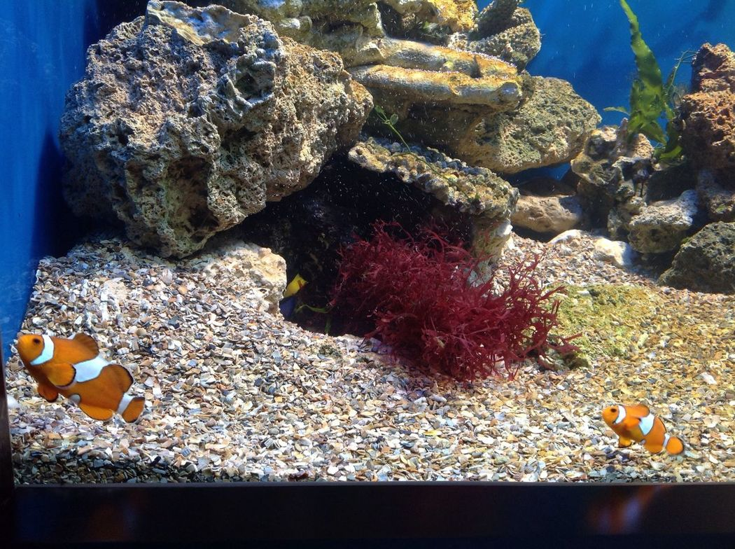 Nemo...!!! ❤ mit seinem vater vereint ? Lina's