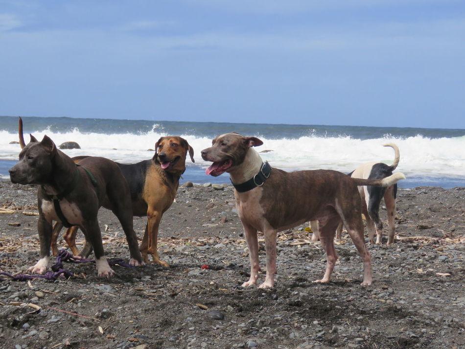 Beachlife Happy Dogs Reunion Island Oceanlife Waterfalls Domestic Animals Granddogs FreshonEyeem