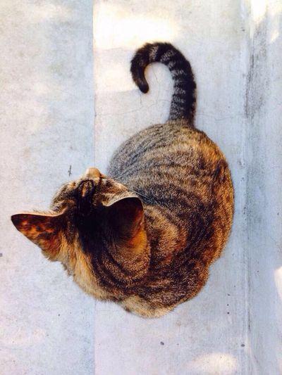 Miau No People Cat Outdoors Close-up Feline Animal Themes Domestic Cat Pets Desde Arriba