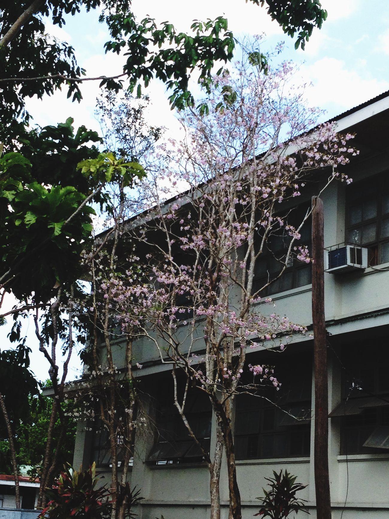 Like cherry blossoms 🌸🌸