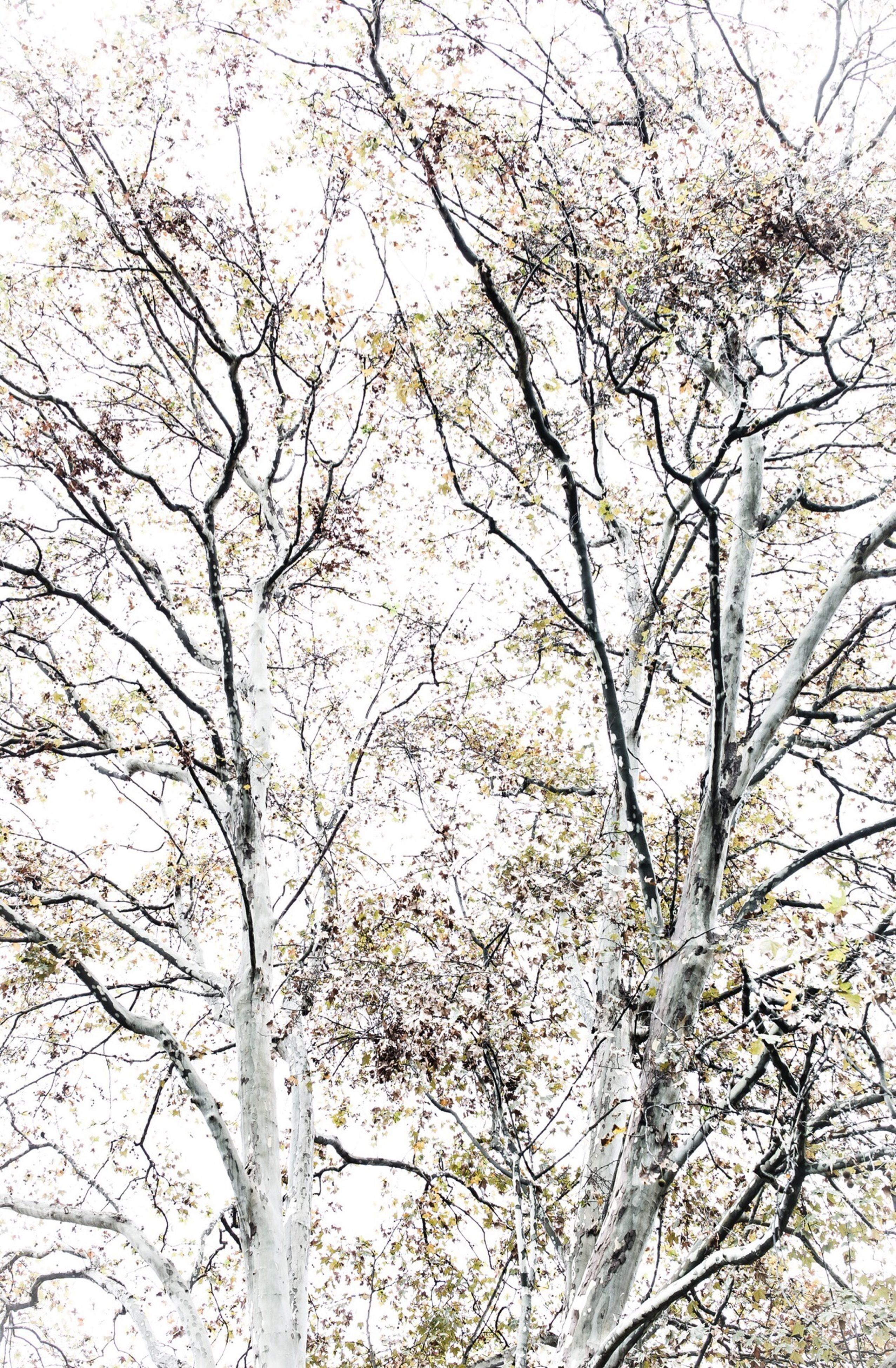 branch, bare tree, tree, low angle view, nature, winter, season, tranquility, cold temperature, beauty in nature, snow, growth, sky, day, outdoors, no people, clear sky, scenics, weather, tree trunk