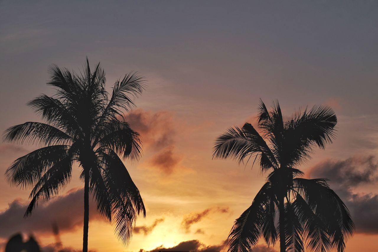 สวัสดีครับ - sàwàddee kráb ~ 37 Beauty In Nature EyeEm Nature Lover Holiday Jacklycat®2017 Light And Shadow Nature O-Yeah😊😄😆 Palm Frond Palm Tree Silhouette Sky Sunset Tranquil Scene Spotted In Thailand Travel Thank You 🙏 Thank You My Friends 😊