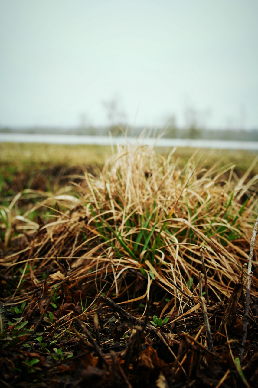 field, nature, focus on foreground, landscape, day, no people, growth, tranquility, outdoors, close-up, beauty in nature, sky, agriculture, clear sky, grass