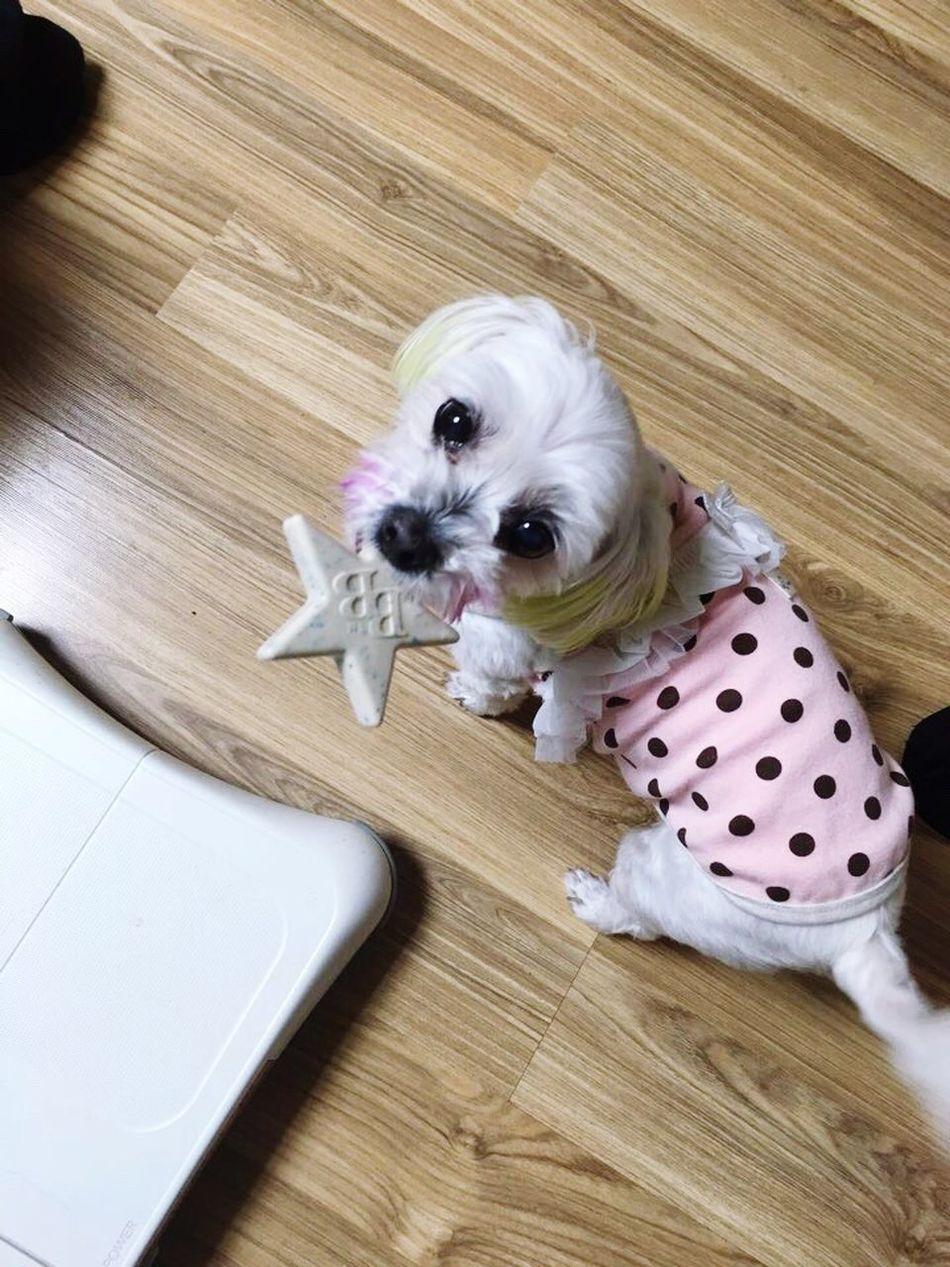 초비 강아지