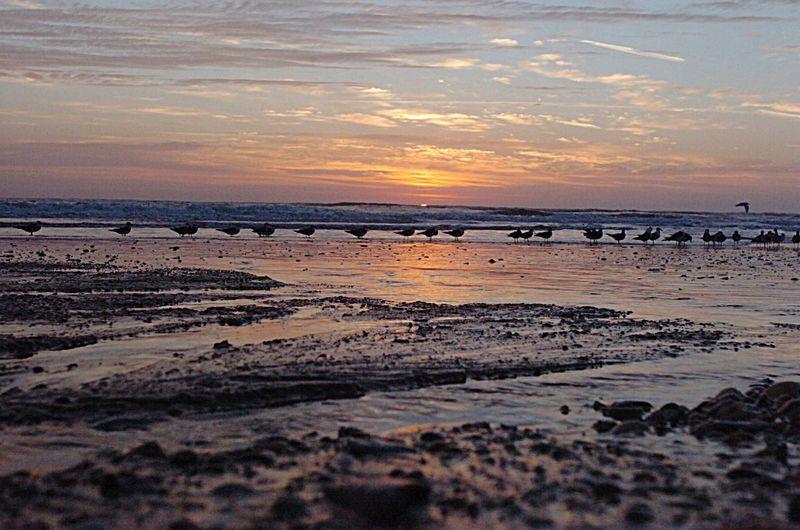 Sunrise Beautiful Landscape St. Augustine Beach Beach Water Sky Bird Sunset #sun #clouds #skylovers #sky #nature #beautifulinnature #naturalbeauty #photography #landscape OpenEdit Landscape_Collection Original Experiences