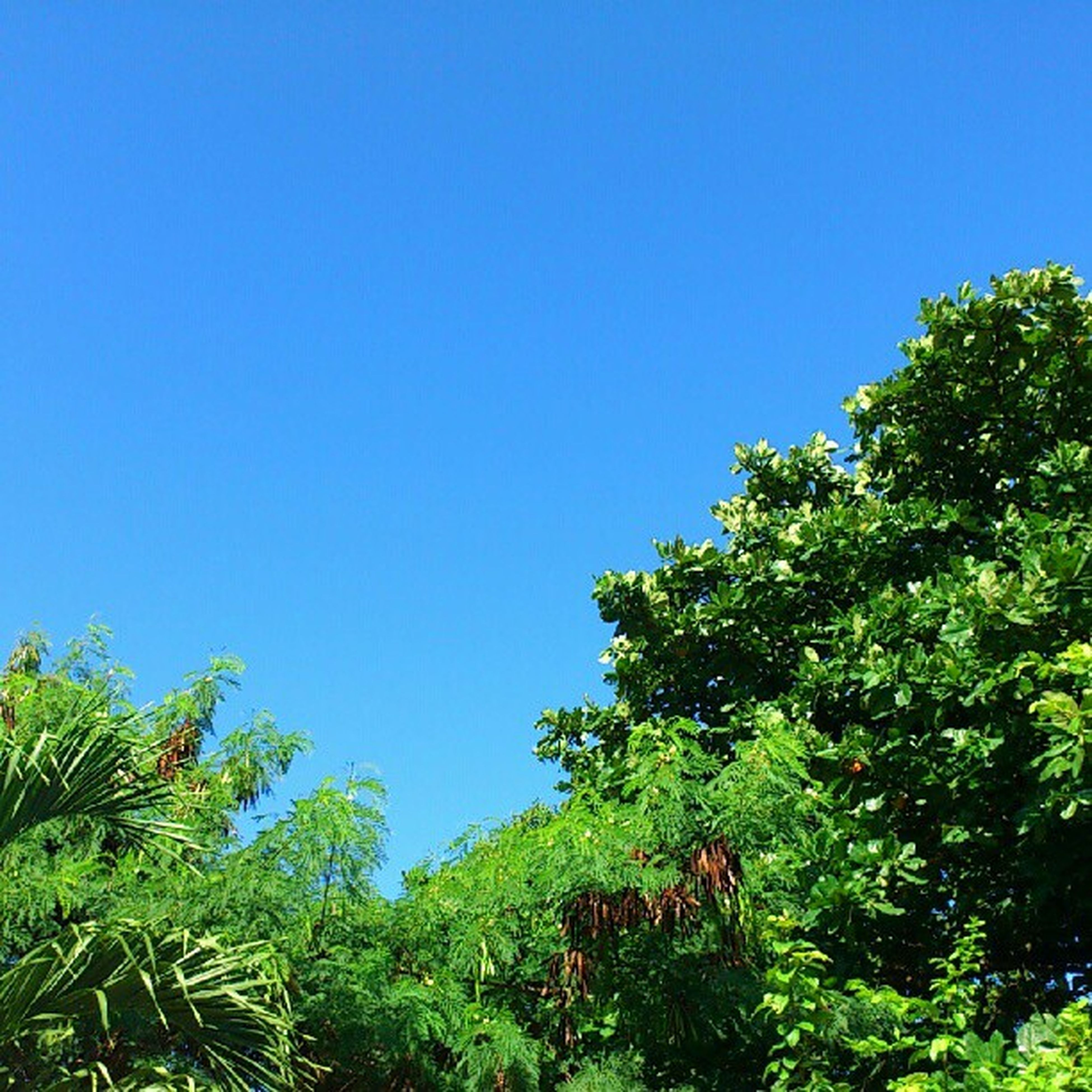 clear sky, tree, blue, copy space, low angle view, growth, green color, nature, tranquility, plant, beauty in nature, green, tranquil scene, animal themes, day, sunlight, one animal, outdoors, lush foliage, scenics