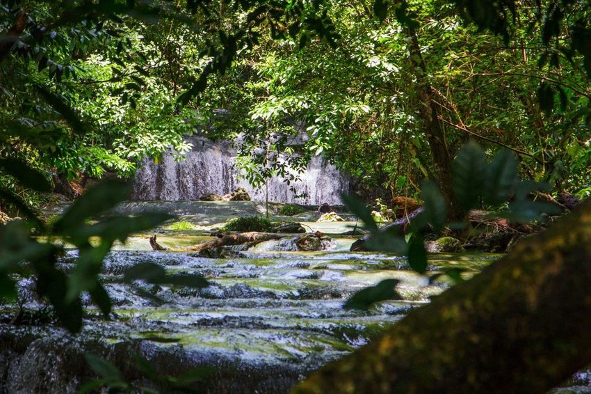 Guatamala Waterfall Jungle Secret Seethrough Nature Green Color Beauty In Nature Outdoors