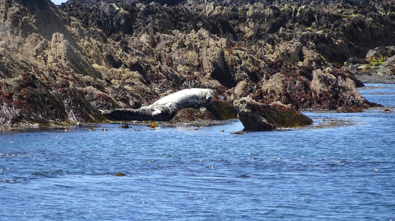 Nature's Diversities Seals On The Sea Shore Seals Seals Chilling Ocean Ireland🍀 Cork Ireland Ocean View Cliffs Rocks And Water Wildlife & Nature