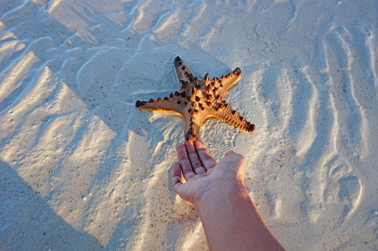 At The Beach Eyeem Philippines Golden Hour Hand At Work Personal Perspective Starfish At Beach The Great Outdoors - 2016 EyeEm Awards The Week On EyeEm White Sand Beach Whitesand Beach  Working Hands Eyeem Photography EyeEm Best Shots People Of The Oceans
