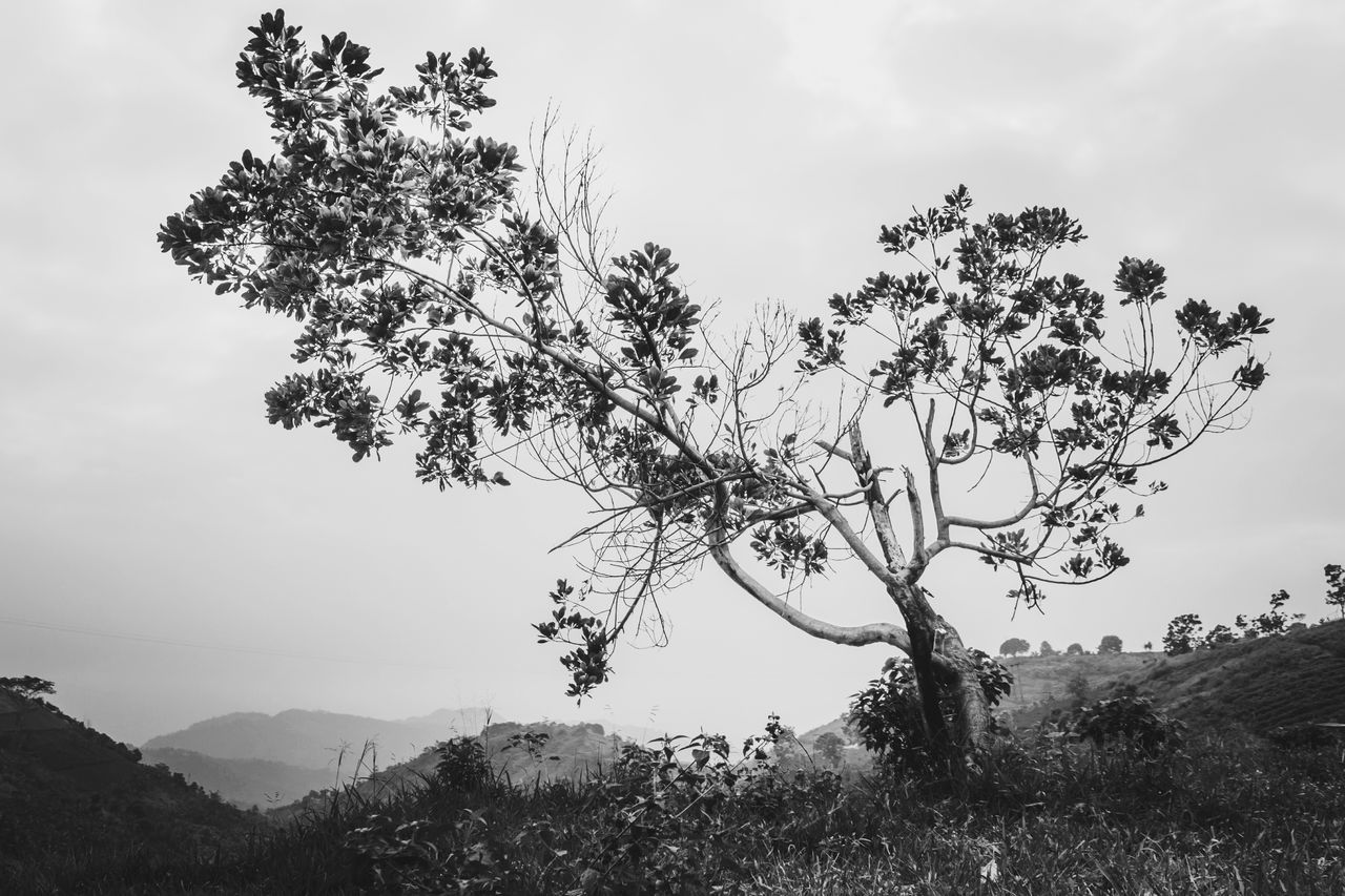 black n white version. Nature Tree Mountain Beauty In Nature No People Sky Cloud - Sky Outdoors Landscape Day Scenics Freshness The Great Outdoors - 2017 EyeEm Awards First Eyeem Photo Landscapes Black And White Black & White Monochrome