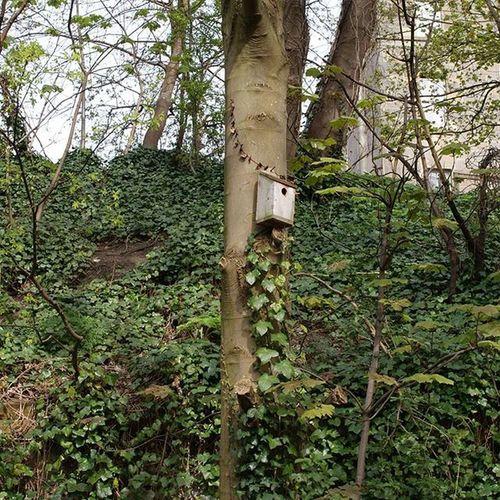 Birdies Birdhouse Ivy