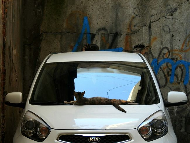 Cats Street Cats Streetphotography Kia Car Summer Views Very Hot Sunny☀ Sankt-peterburg Russia Hidden Gems