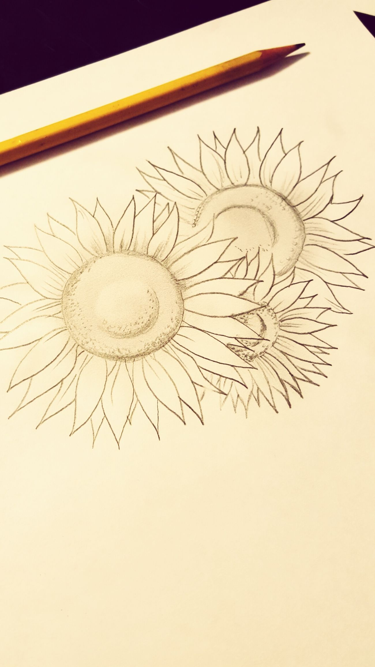 The endless drawing life of a tattoo artist Tattooartist  Pencil Drawing Sunflowers Freelance Life