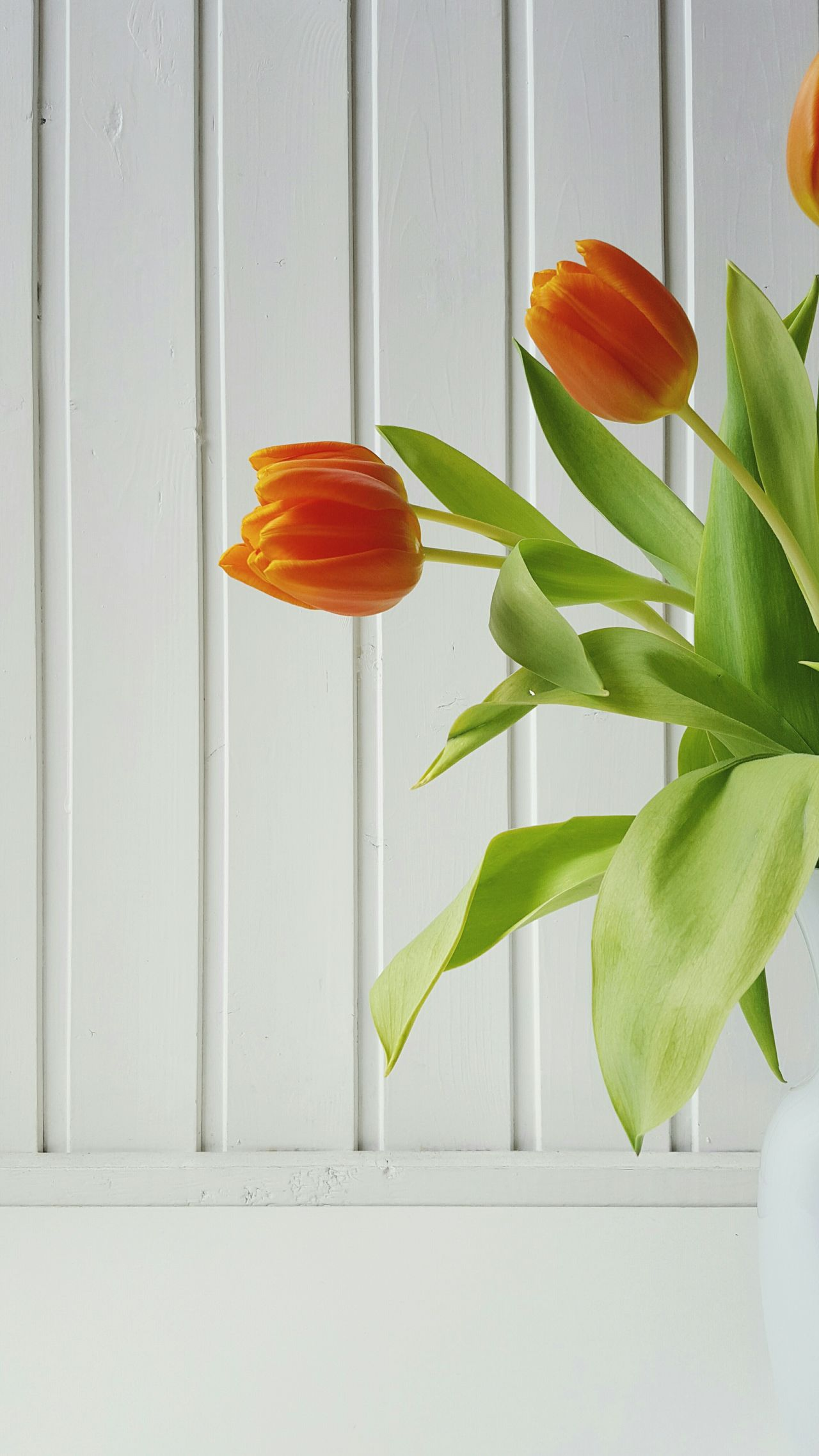 Minimal Showcase: February White Wall White Wood Orange Tulips Blossoms  Green Leafes Flower Petals Nature Delicious Smell Spring Vase Decorating Interior Design Flowers Bouquet Framing White Album Minimalism Scent Lines Porcelain  Gift