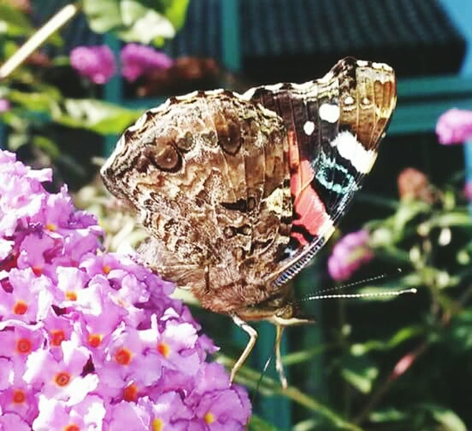 Butterfly Enjoying Life picture made with Samsung Mobile