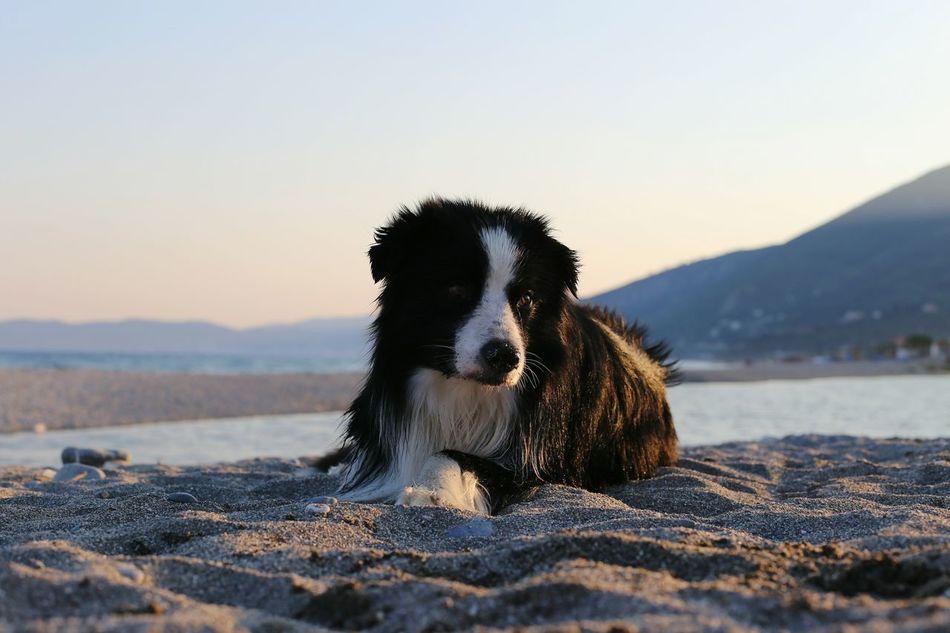 Beautiful stock photos of pinguin,  Animal Themes,  Beach,  Beauty In Nature,  Carnivora