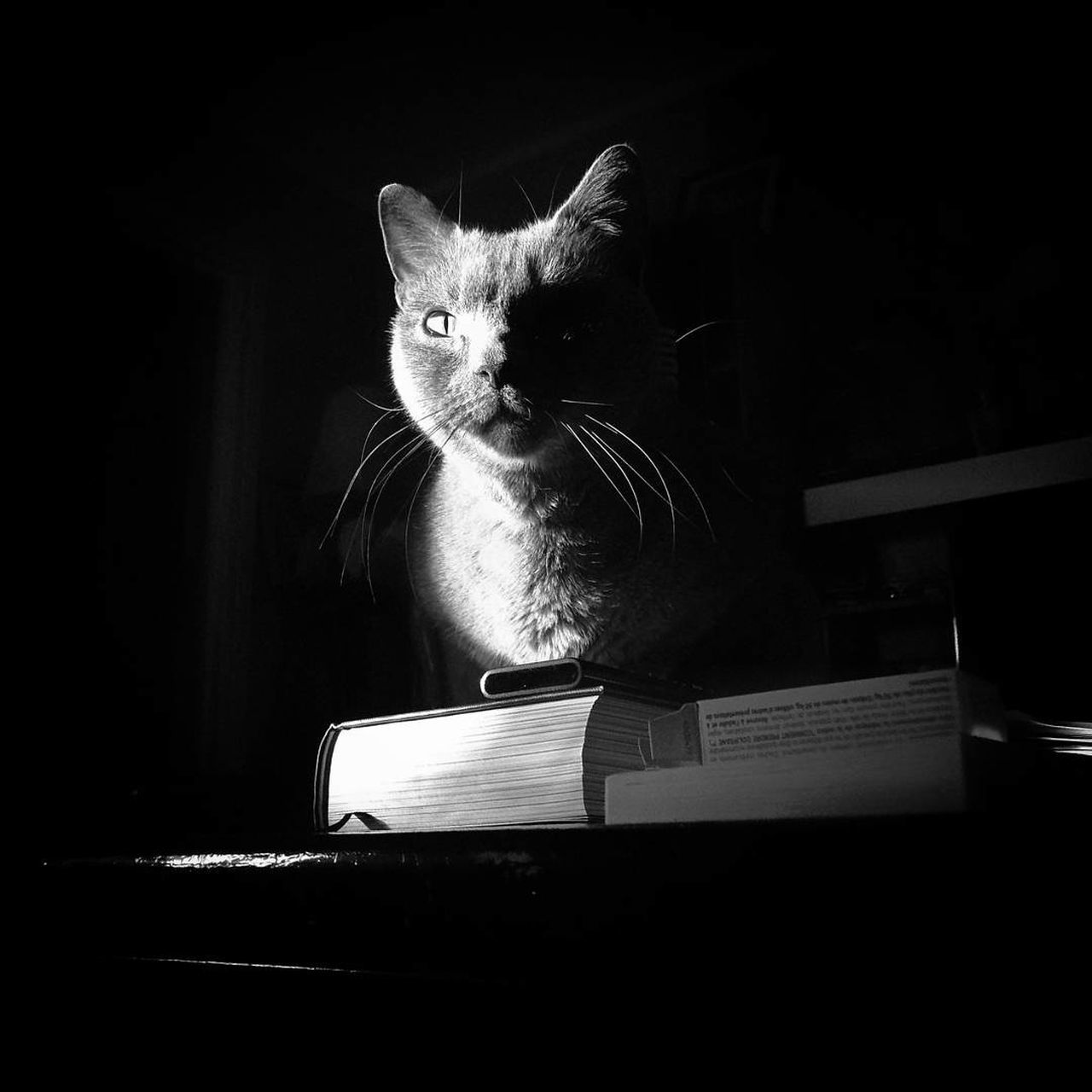 Morning light.. 🐱 Cat Cats Of EyeEm Light And Shadow Blackandwhite Animal Photography Animal Head  Animal Themes