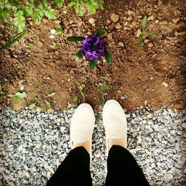 Springmood Flower Shoes