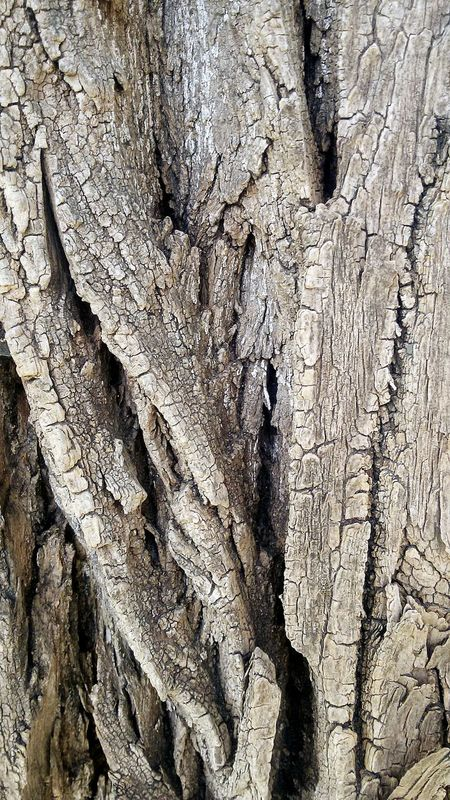 Tree Bark Tree Bark Texture Textures In Nature Rough Surfaces Abstract Tree Lovers