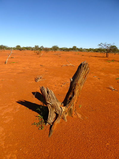 Arid Climate Beauty In Nature Central Australia Desert Landscape No People Outdoors Red Desert Red Earth Sand Sky The Great Outdoors - 2017 EyeEm Awards Tree Weathered Tree Stump Weathered Wood