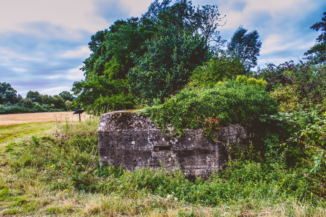 Tree Outdoors Sky Day No People Growth Cloud - Sky Nature Agriculture GrassGrass PILLBOX War Defense Shelter Landscape Scenics Military Structure Ww2 WWII Architecture