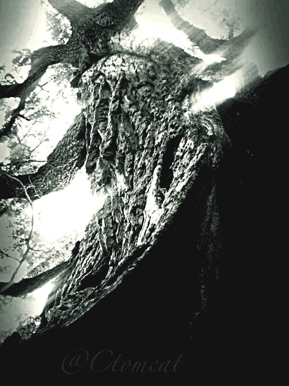 Blackandwhite TreePorn Bw_collection EyeEm Nature Lover