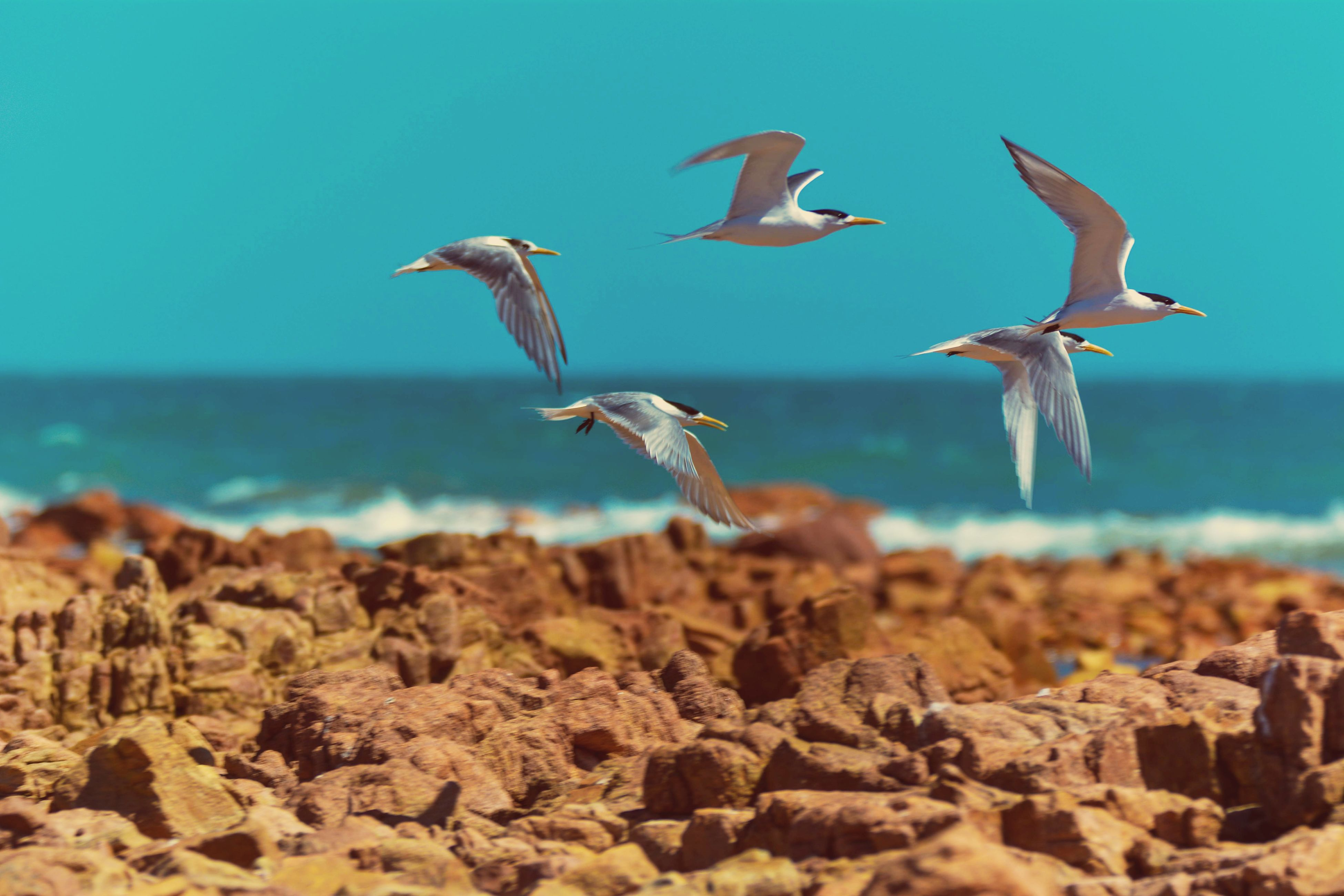 animals in the wild, bird, flying, sea, animal themes, animal wildlife, beach, day, outdoors, no people, large group of animals, water, spread wings, scenics, nature, beauty in nature