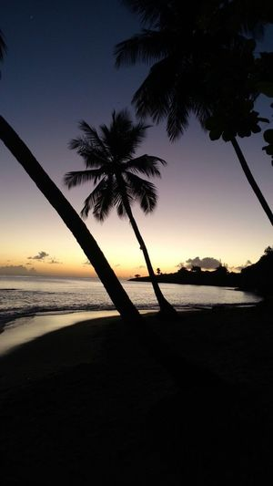 Sea Sunset Beach Water Beauty In Nature Horizon Over Water Tranquil Scene Scenics Nature Palm Tree Sky Tranquility Tree Idyllic Shore No People Outdoors Day