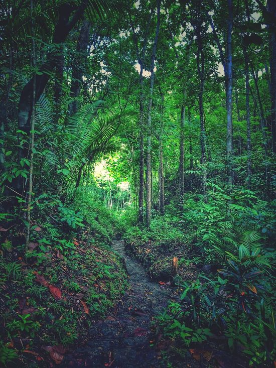Nature. Nature Forest Growth Tree Outdoors No People Woods Day Beauty In Nature Bamboo Grove Iphoneonly Cebu Xhristian2017 Camotes People Nature