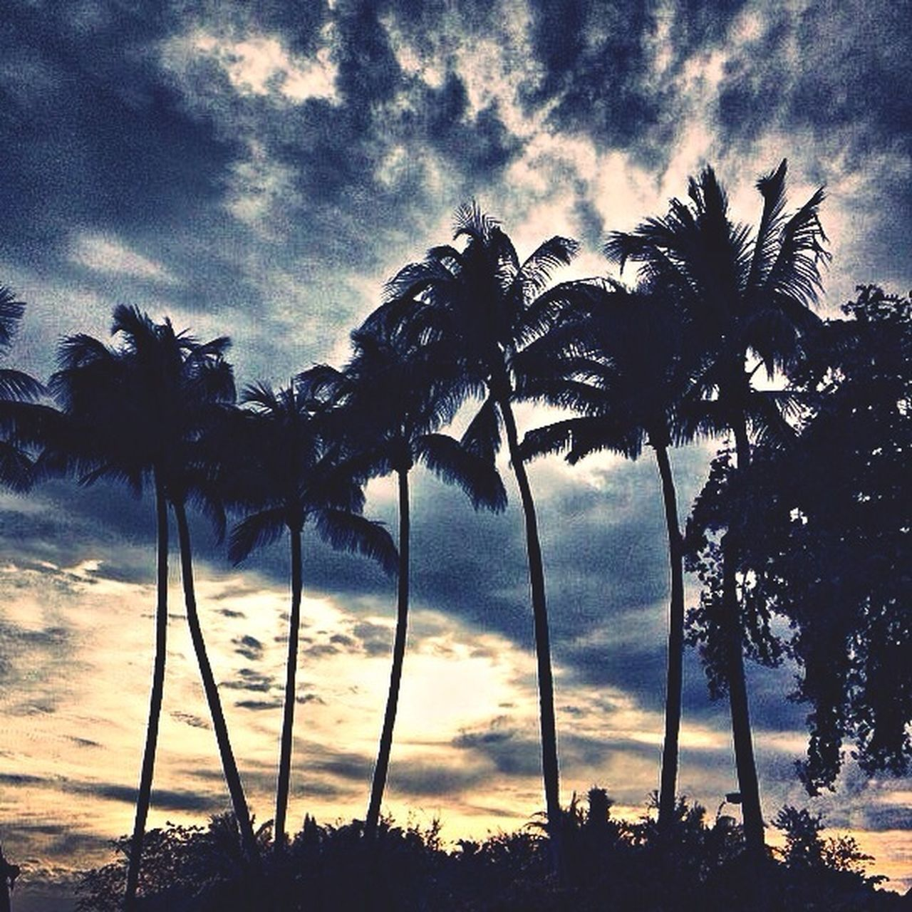 palm tree, tree, cloud - sky, sky, silhouette, tree trunk, sunset, beauty in nature, tranquility, low angle view, nature, growth, tranquil scene, scenics, outdoors, no people, beach, day