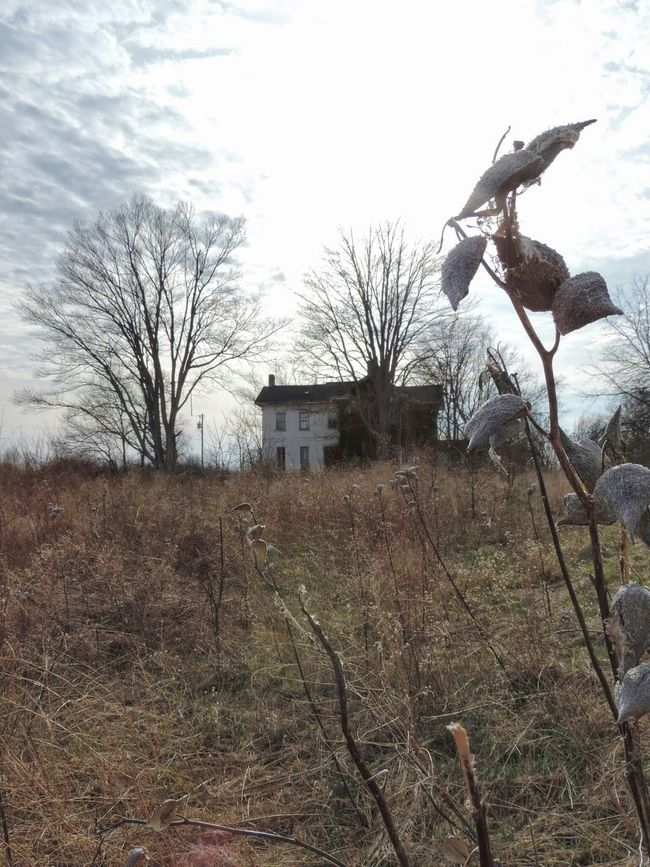 Rural Rurex Rural Exploration Jeffersonville Ohio Abandoned Abandoned Buildings Abandoned House Tree Branches Tree