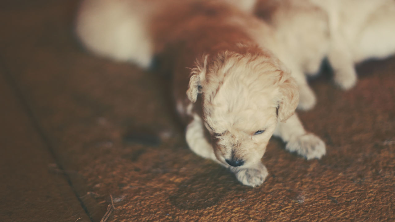 Beautiful stock photos of cute, Animal Themes, Cute, Dog, Domestic Animals