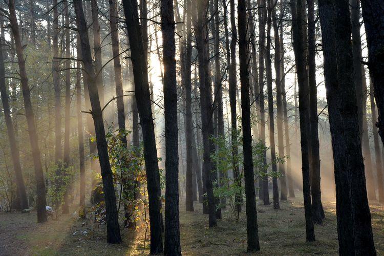 Las Natura Piekna Polska Piekna Przyroda Runo Leśne Polskajestpiekna Polska Złota Jesień Beauty In Nature Outdoors Słońce Sun Nature
