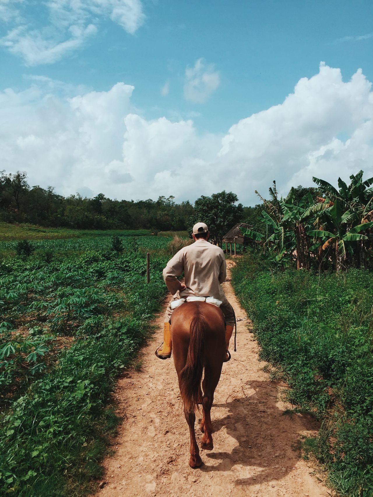 Beautiful stock photos of tiere, horse, mammal, domestic animals, full length