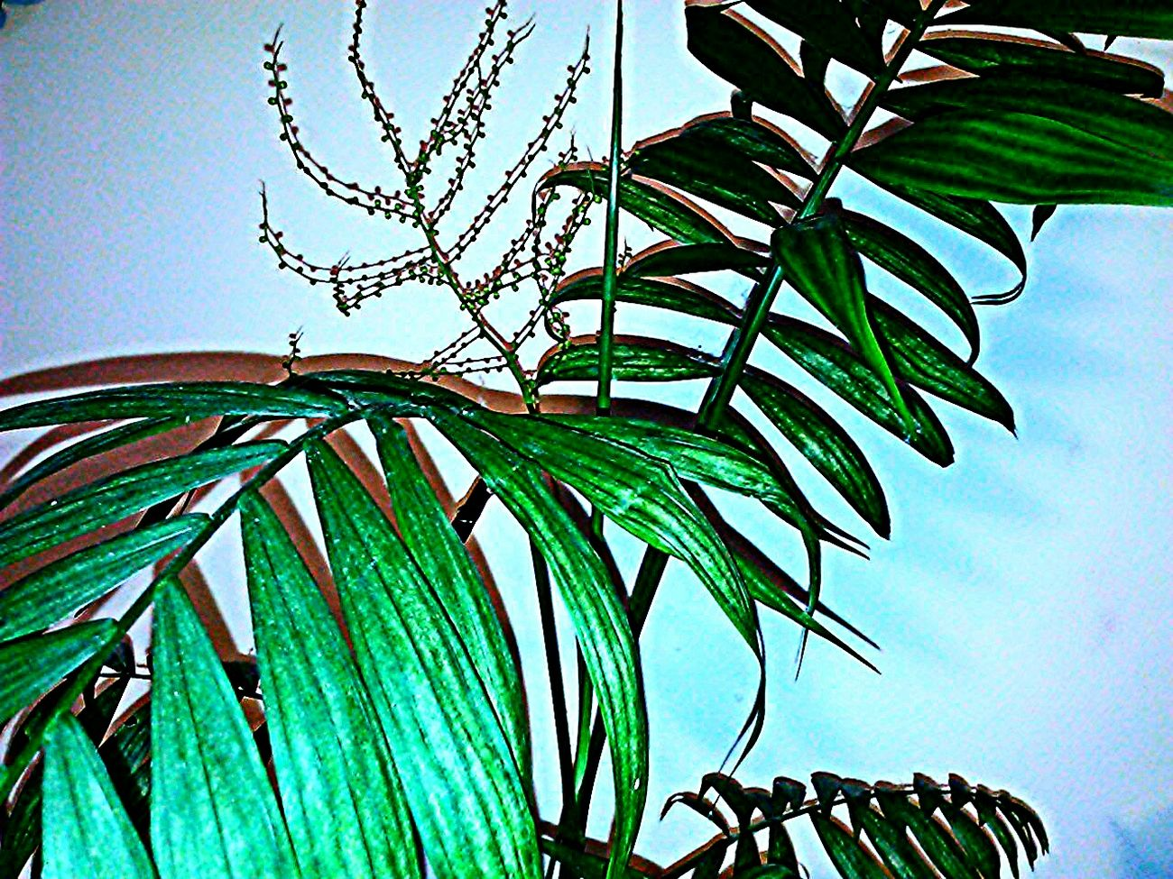 Blooming Palm My Plants Plants