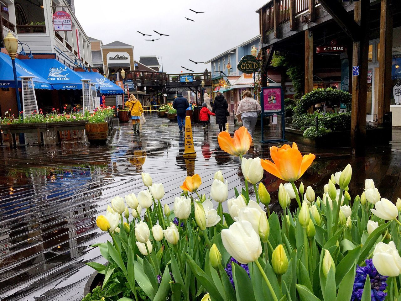 One day in pier39 Flower Petal Growth Plant Water Architecture Fragility Freshness Building Exterior Built Structure Nature Beauty In Nature Flower Head Wet Blossom Outdoors Day City Floating On Water Real People