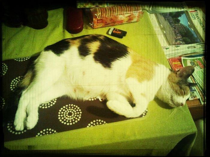 Ma tehotna kocicka ;)