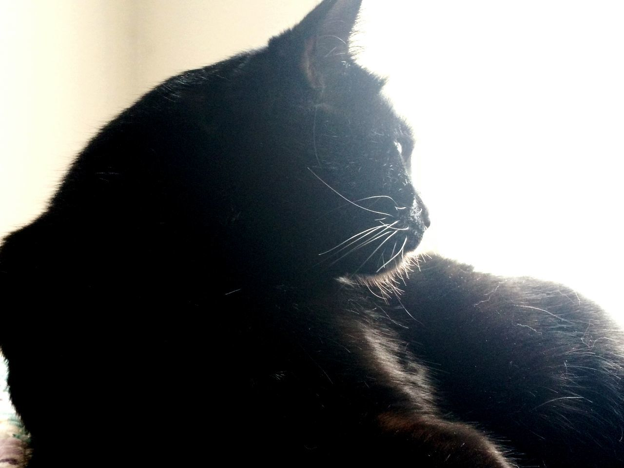 Window Domestic Animals Indoors  Cat♡ Black Cat Black Cat Photography Cat Eyes Cat Gaze Tranquility Cat Lovers Yellow Eyed Cat Black Cats Are Beautiful Cats Of EyeEm Cat Animal Themes Black Color Domestic Cat Feline Yellow Eyes Sunlight Beauty In Nature Pets One Animal