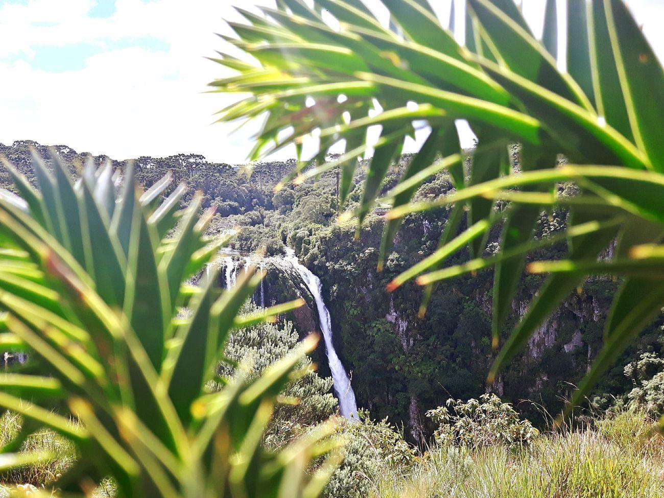 Cachoeira Cascata Rio Cambaradosul Agua AndreLima Water Canions Pedras Serra Vegetação Verde Green Expedicao Ecologic Nature