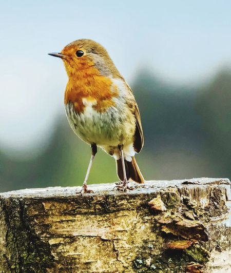 Bird Water Nature One Animal Perching Animal Wildlife No People Day Close-up Outdoors Animals In The Wild Beauty In Nature Animal Themes