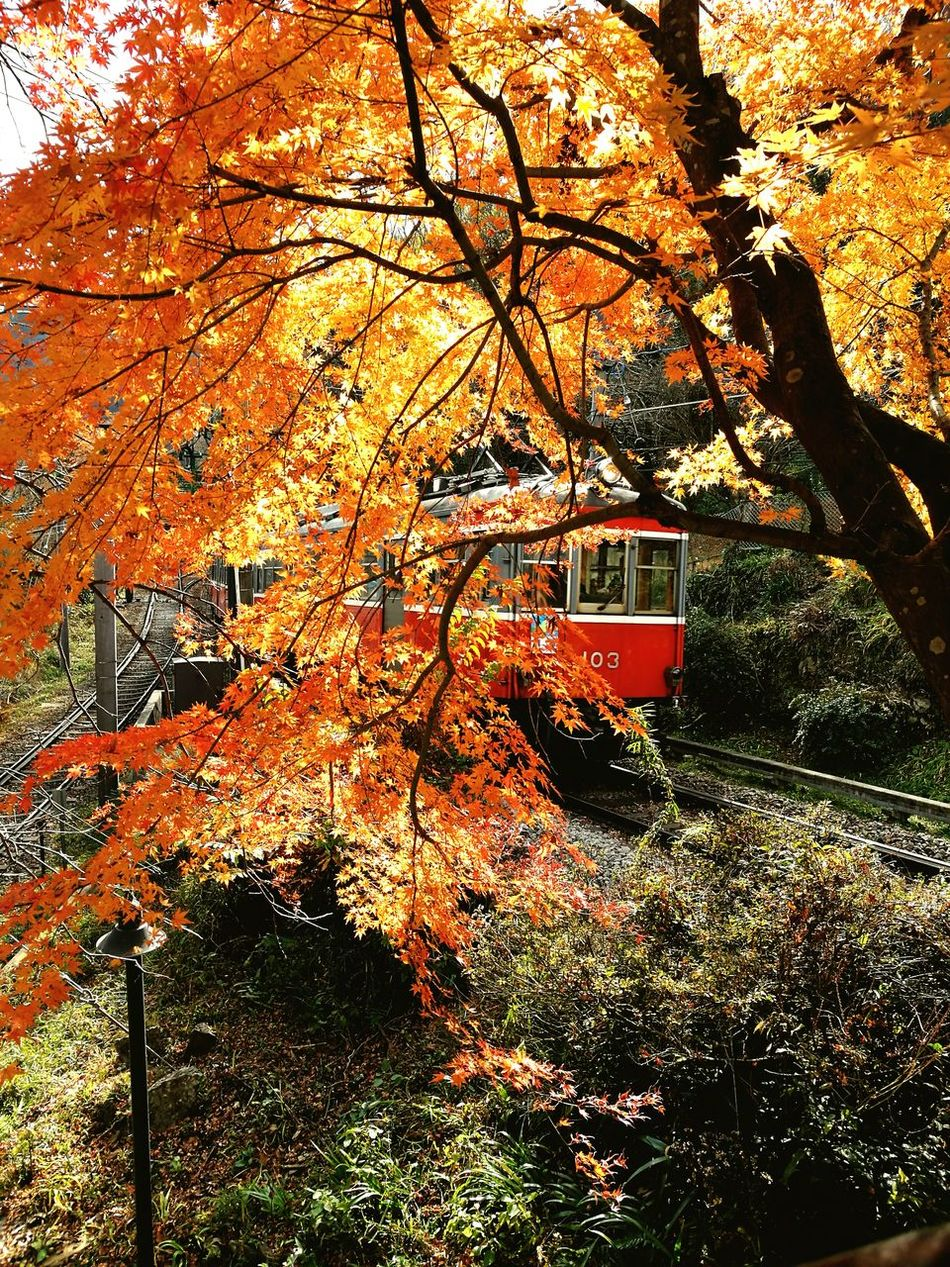 Tree Transportation No People Outdoors Nature Beauty In Nature 箱根 箱根登山電車 箱根登山鉄道 大平台 Nature Tree