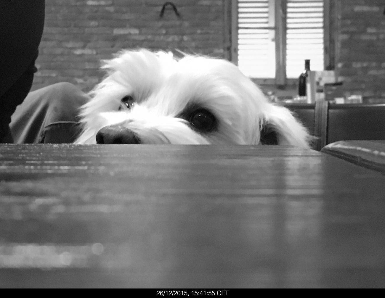 Pets Dog Domestic Animals Animal Themes One Animal Mammal Indoors  Day Close-up No People