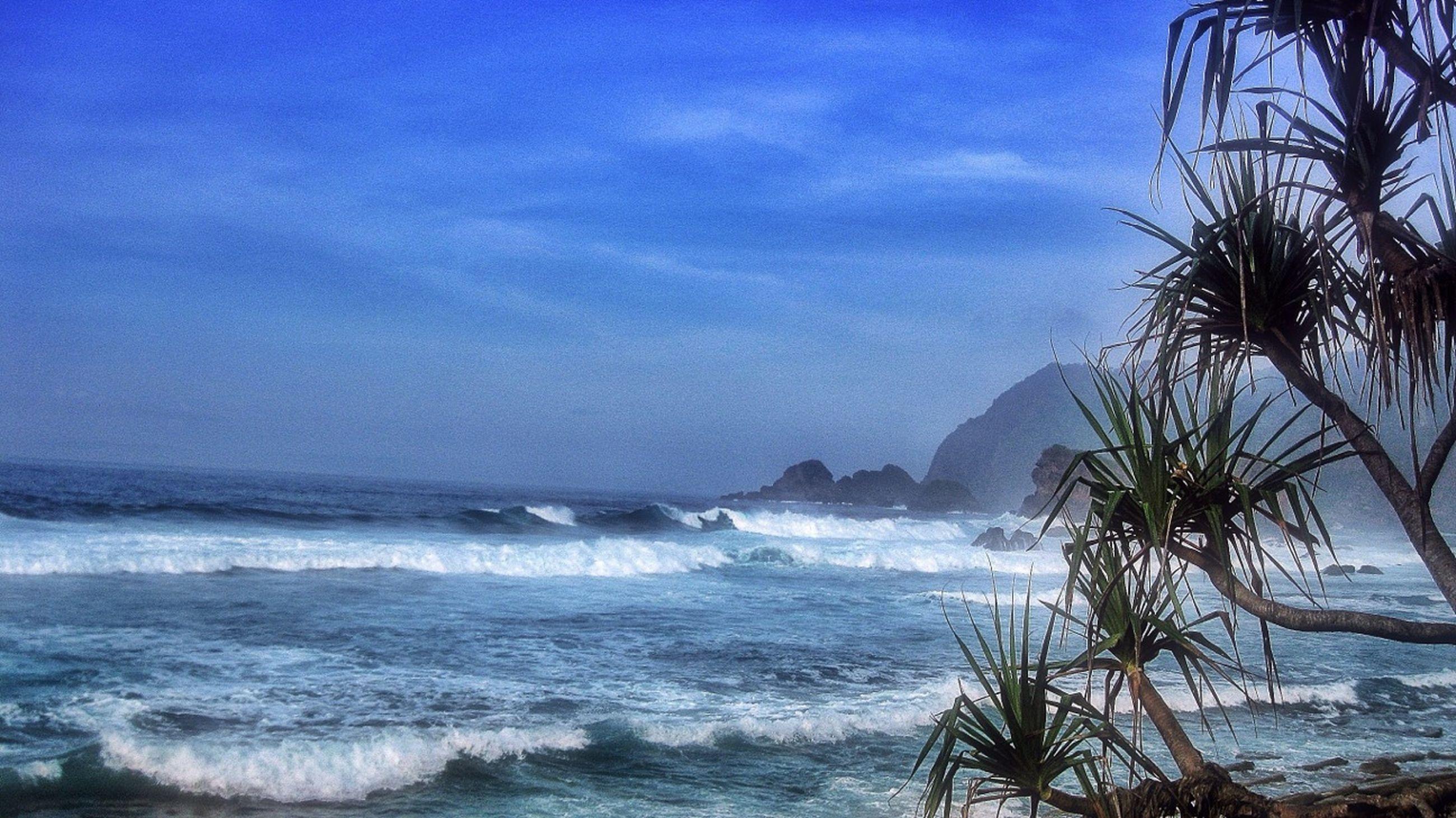 sea, water, horizon over water, beach, sky, scenics, tranquil scene, tranquility, beauty in nature, shore, palm tree, nature, tree, wave, blue, cloud - sky, coastline, idyllic, cloud, surf