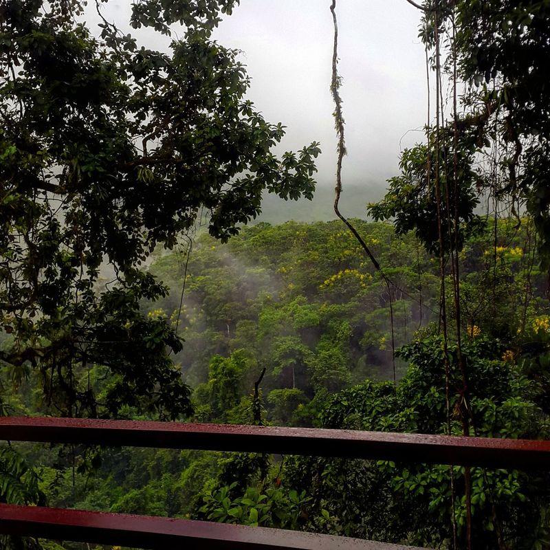Costarica Nature Photography Nature Travelblog Anastasiasadvantures EyeEm Nature Lover Jetsetter Gothere Jungle