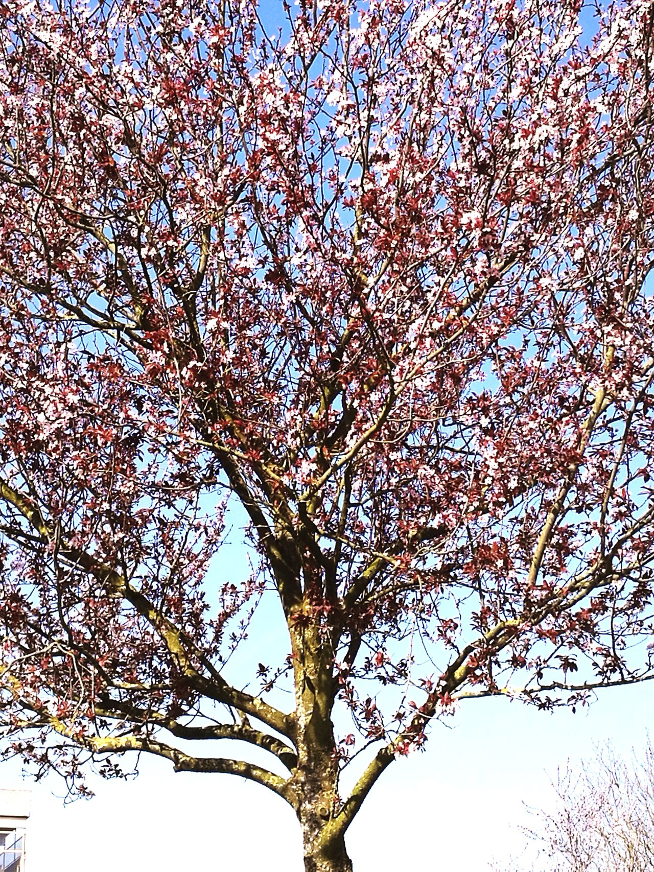Low Angle View Tree Sky No People Nature Outdoors Branch Close-up Day Backgrounds Beauty In Nature Animal Themes Millennial Pink Huawei P9 Plus Photography Made By Noesie