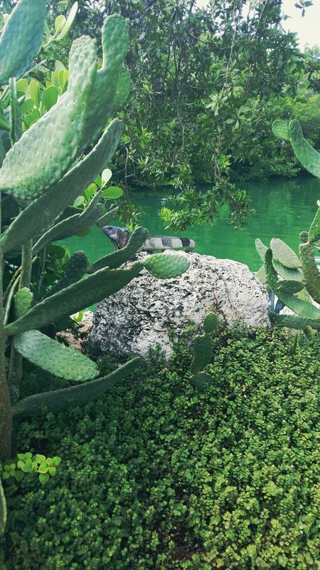 Iguana Catus Scenery Canal