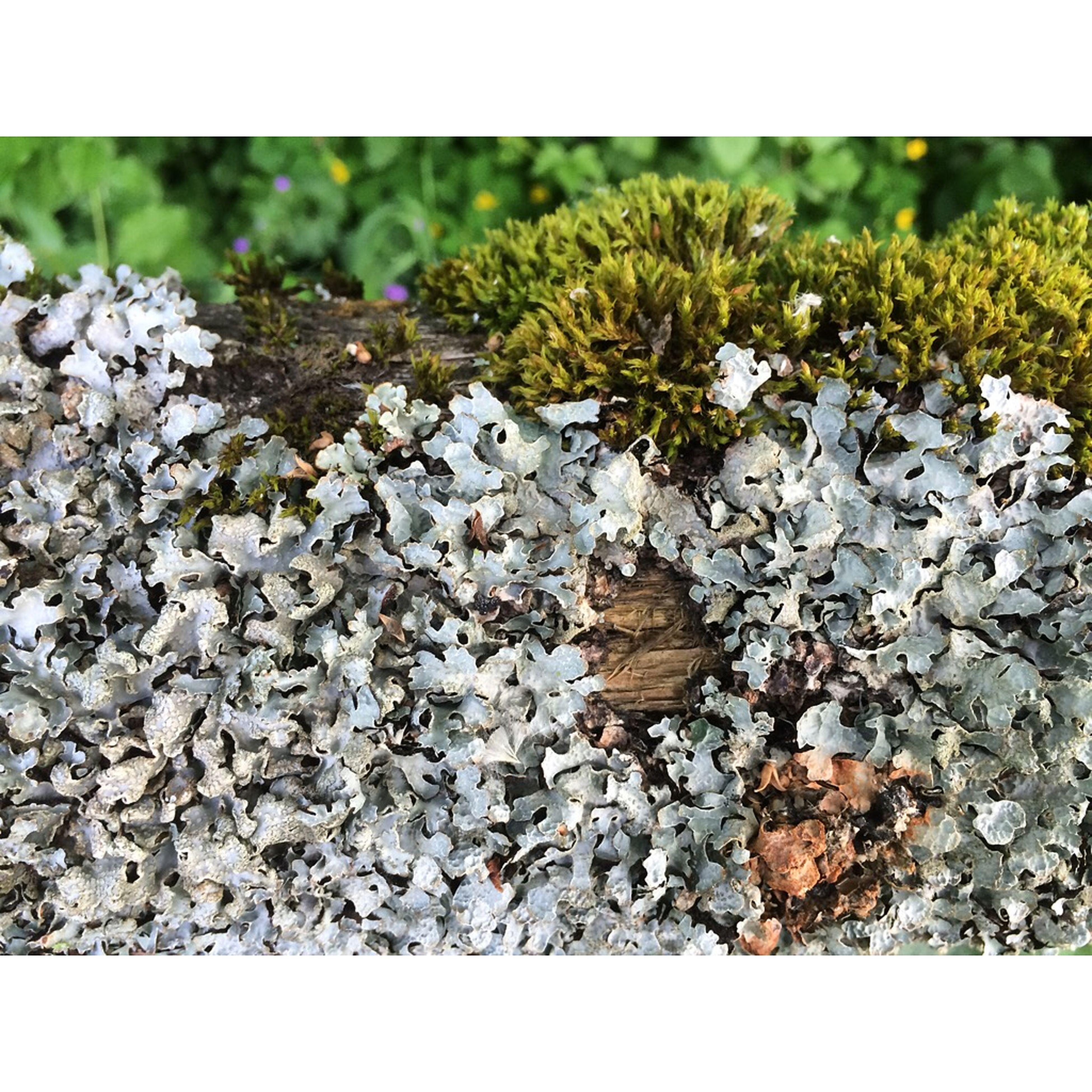 transfer print, auto post production filter, growth, nature, plant, field, tranquility, day, stone - object, rock - object, beauty in nature, close-up, outdoors, selective focus, stone, no people, leaf, textured, rock, fragility